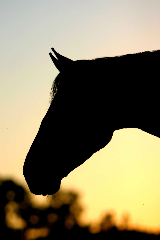 skånegårdar söker ny hästgårdsmäklare