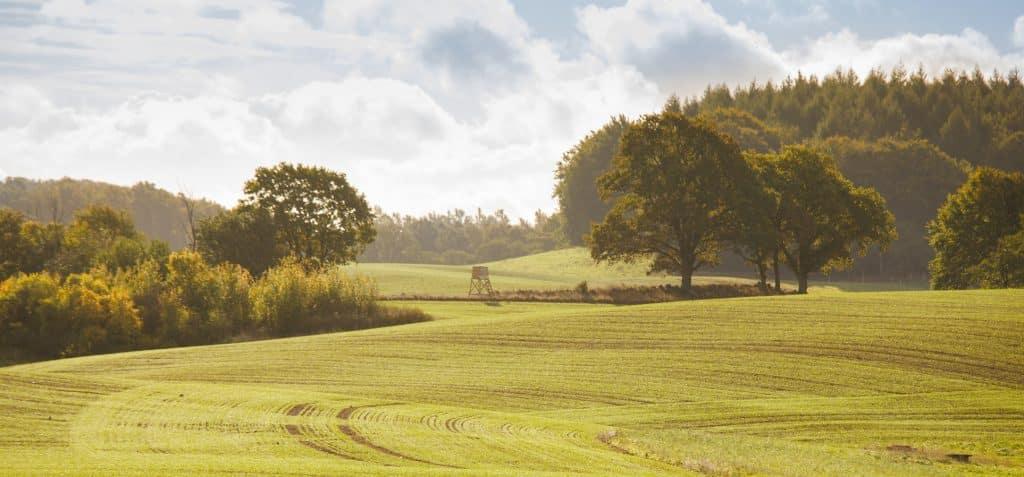 sälja skog med skånegårdar