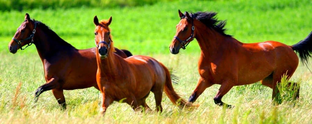 sälja hästgård